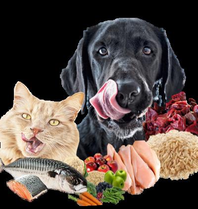 Waar kunt u goed hondenvoer bestellen?